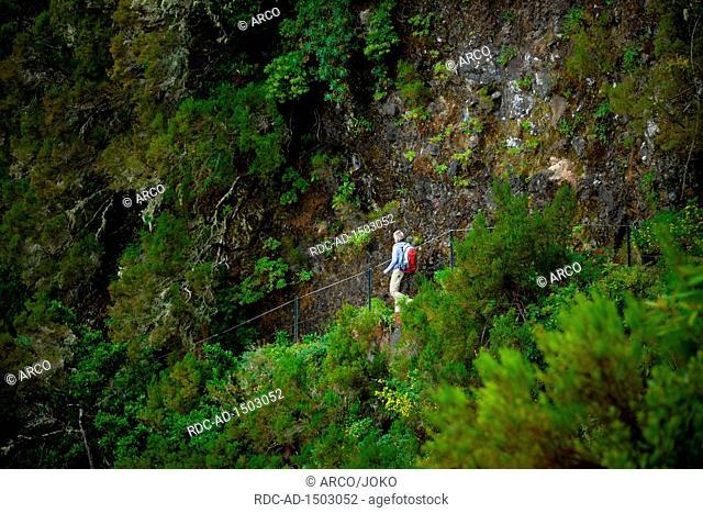 Wanderweg, Rabacal-Tal, Zentralgebirge, Madeira, Portugal