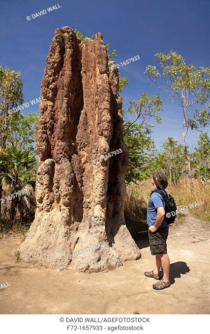 Tourist next to cathedral termite mounds, Litchfield National Park, Northern Territory, Australia
