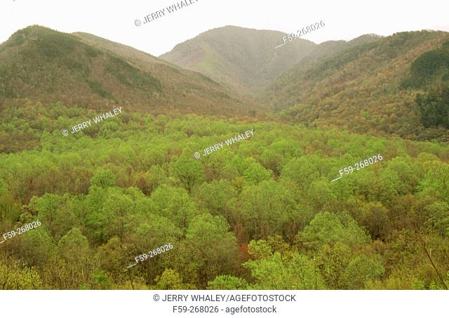 Spring foliage. Great Smoky Mountains National Park. Tennessee. USA