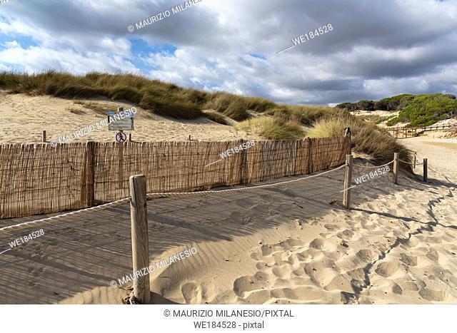 Mallorca, Spain, August 16 2019: sign prohibiting access to the regeneration sand dune reserve, Cala Mesquida beach Majorca Spain