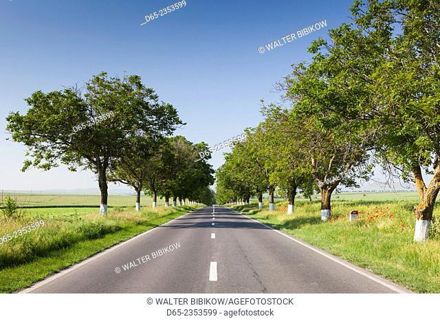 Romania, Danube River Delta, Tulcea, country road