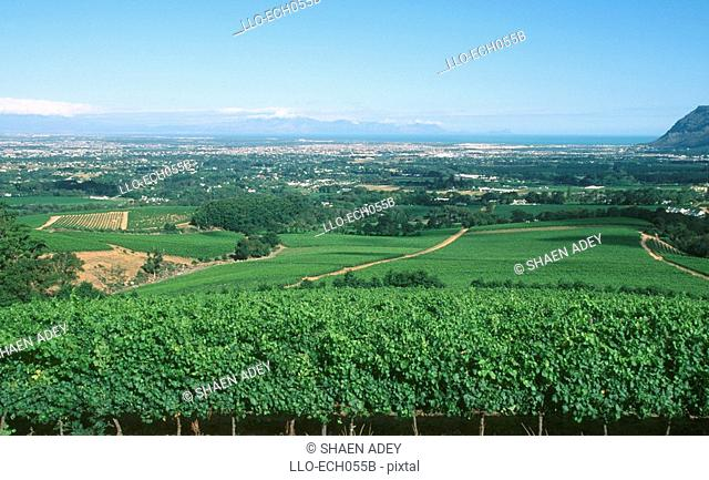 View Over Klein Contantia Vineyards  Peninsula, Western Cape Province, South Africa