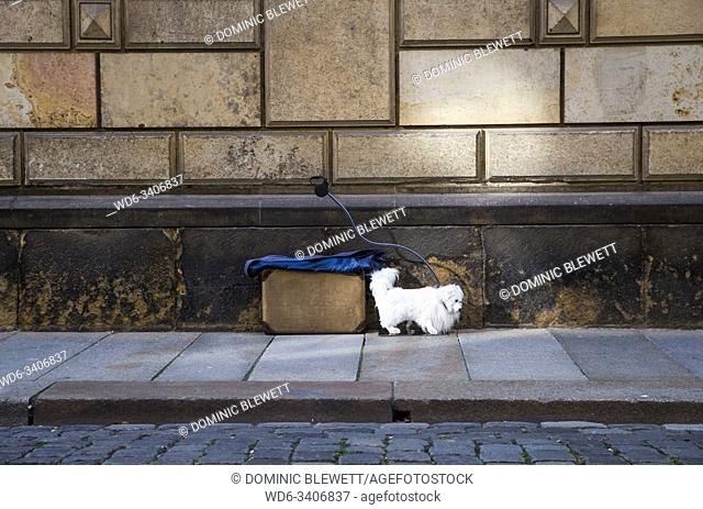 A street performer's dog prop waits for him to return in Dresden, Germany