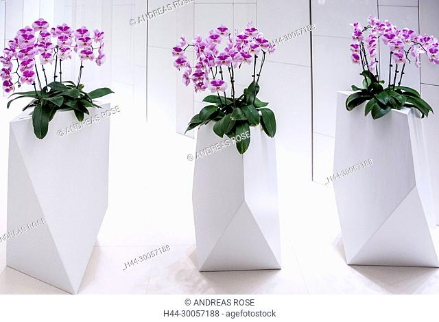 orchids, pink, vases, white