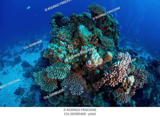 Corals, Red Sea, Marsa Alam, Egypt