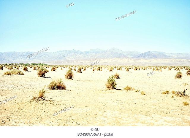 Landscape view of Devil's Cornfield, Death Valley, California, USA