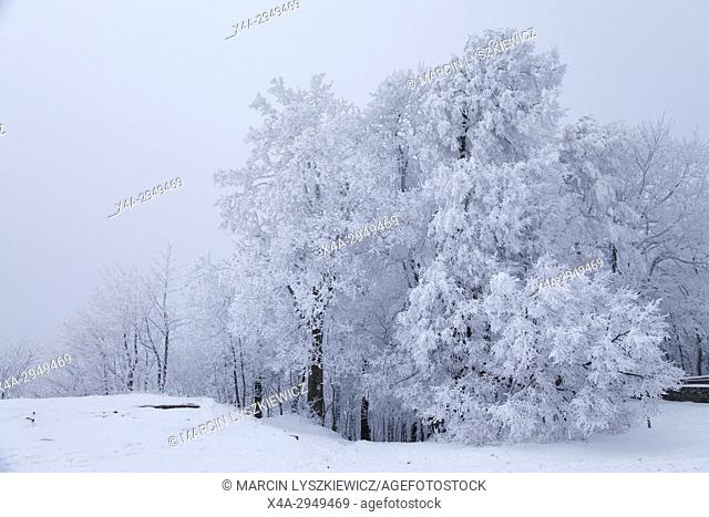 Old Trees covered with White Frost, Sleza Mountain, Lower Silesia, Poland