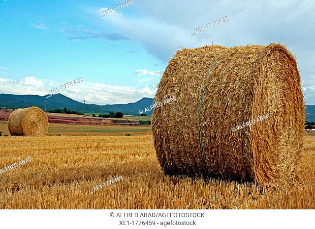 bale of straw, Bages, Catalonia, Spain