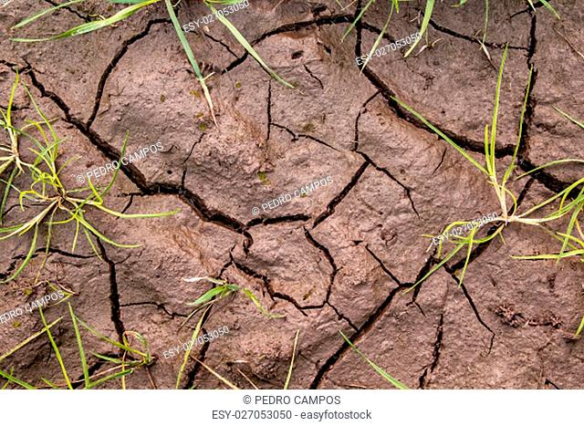 Dirt with cracks and grass