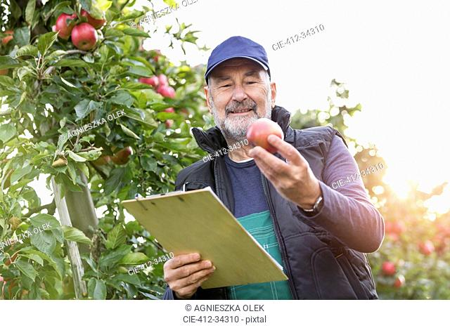 Male farmer with clipboard inspecting apples in orchard
