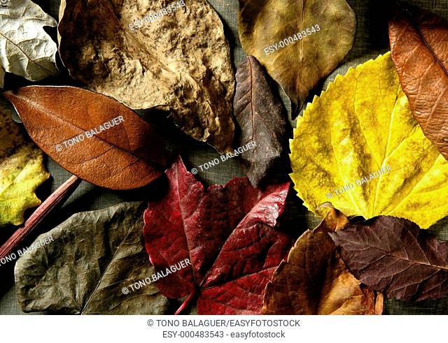 Still of autumn leaves, dark wood background, fall classic images