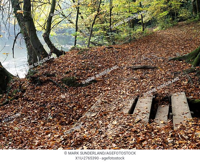 Fallen Leaves on a Path by the River Nidd in Foolish Wood in Autumn Knaresborough North Yorkshire England