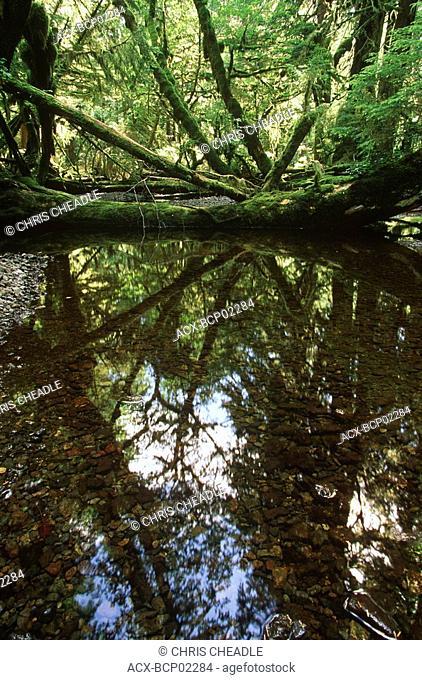 Haida Gwaii, near Burnaby Narrows, small creek reflection, British Columbia, Canada
