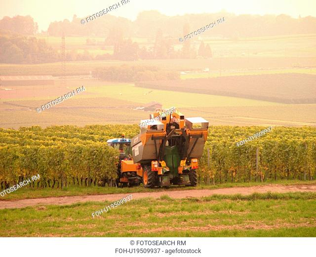 Switzerland, Europe, Vaud, Tartegnin, La Cote, wine harvest, vineyards, grape collection machine