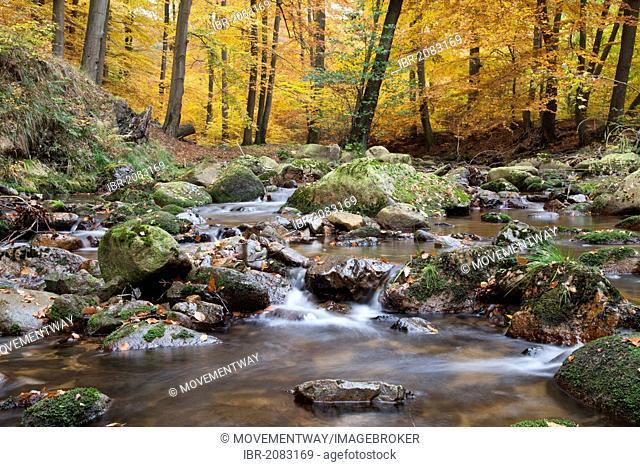 Ilse river in autumn, Ilsetal valley, Ilsenburg, Harz region, National Park Harz, Saxony-Anhalt, Germany, Europe, PublicGround