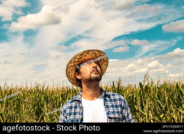 Serious corn farmer looking up at the sky