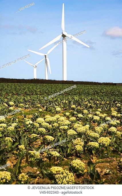 Carland Cross Windfarm. Cornwall. England. UK