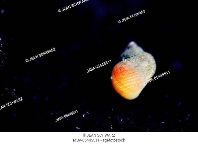 Snail on dark stone