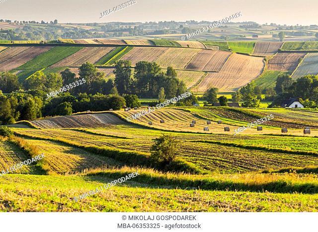 poland village, field poland, ground, country, travel europe, travel poland, europe, poland, polen, polska, swietokrzyskie, ponidzie, agriculture, area
