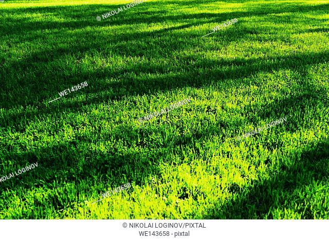 Horizontal green grass with tree shadows bokeh background
