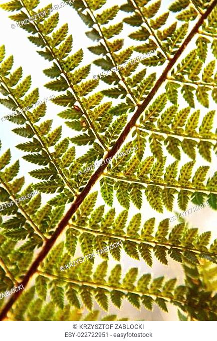Detail of green ferns as a background