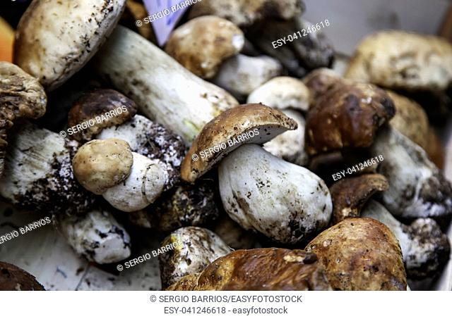 Mushrooms, detail of fresh mushrooms, delicious food