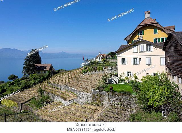 Wine terraces over Lake Geneva, Epesses in Lavaux, near Lausanne, canton of Vaud, Western Switzerland, Switzerland