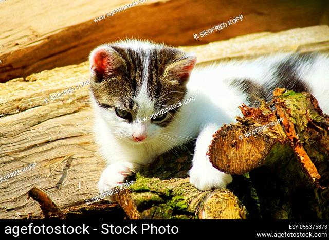 Kitten in summer under a blue sky