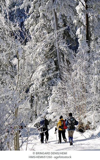 France, Haut Rhin, White Lake, Col du Calvaire, snowshoe hikers, forest, snow, winter