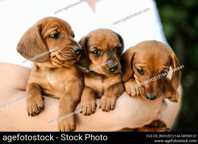 Midsection of woman with puppys standing outdoors