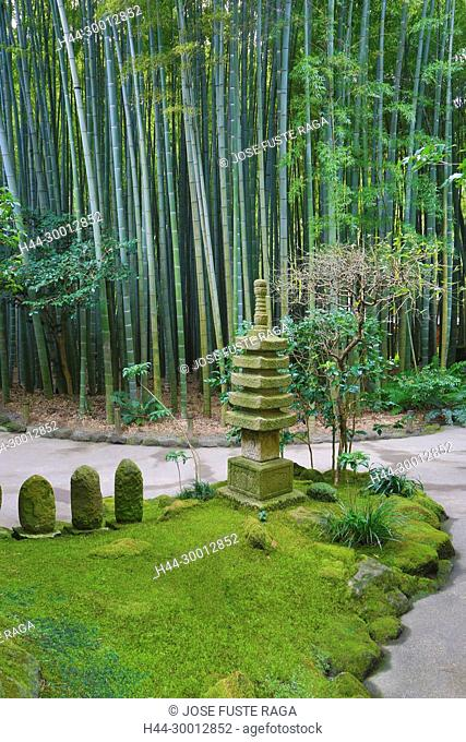 Japan, Kamakura City, Hokoku-ji Temple, Bambu Forest