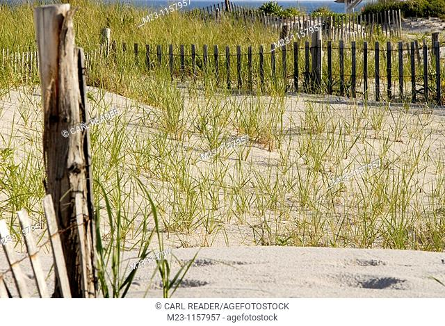 Fences form a network on the dunes, Long Beach Island, New Jersey, USA