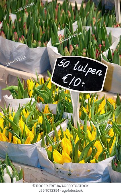 Flowers, tulips and bulbs on sale at night in the Flower Market Bloemenmarkt floating market, Amsterdam