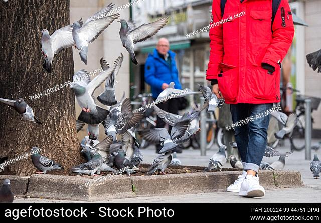 24 February 2020, Lower Saxony, Hanover: Pigeons fight for leftovers of bread that a passer-by had thrown at them. The ordinance on public safety and order in...