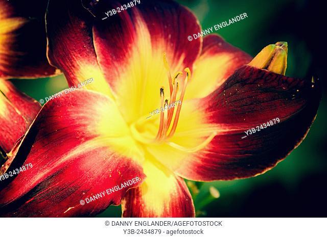 Elegant Vintage Style Flower