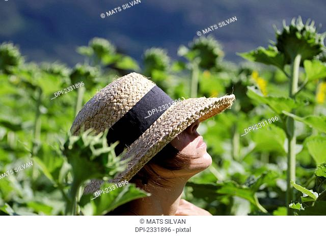 A woman wearing a sunhat stands in a field full of tall sunflowers;Locarno ticino switzerland