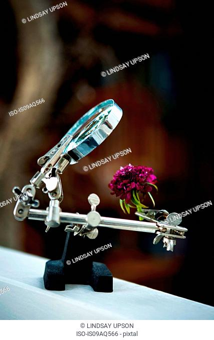 Quirky flower arrangements with carnation and magnifying glass on clamp