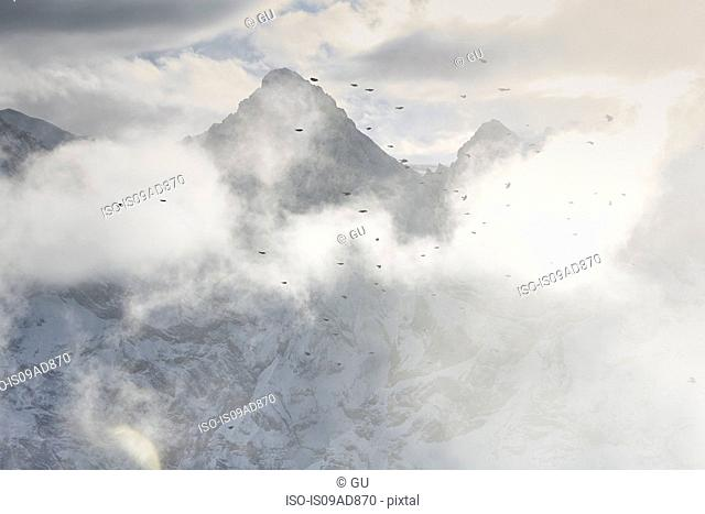 Birds flying through clouds, Schilthorn, Murren, Bernese Oberland, Switzerland