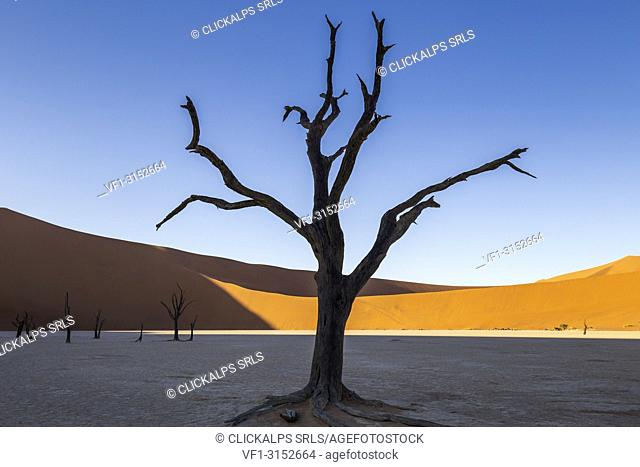 Dead acacia trees and sand dunes,Deadvlei clay pan,Namib Naukluft national park,Namibia,Africa