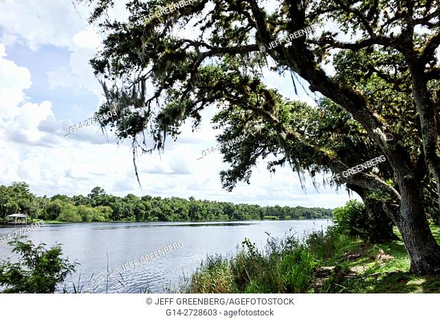 Florida, Hendry County, La Belle, Caloosahatchee River, Bob Mason Waterfront Park, public park, tree, live oak, Spanish Moss, trunk, bark