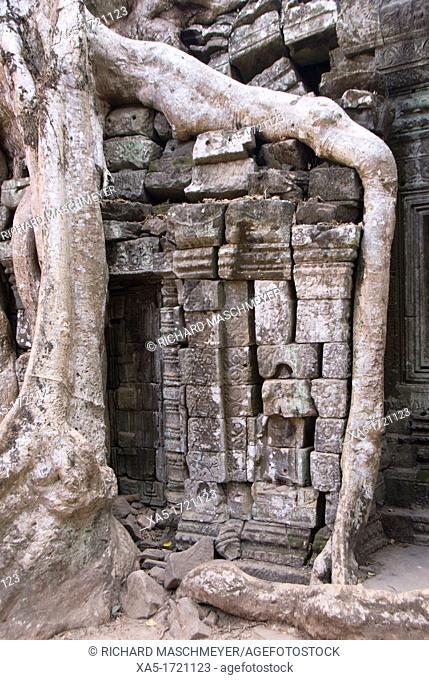 Ta Prohm, Angkor Archaeological Park, Siem Reap, Cambodia