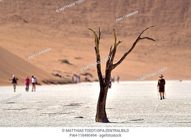Dead trunk of an acacia tree in Dead Vlei, visitors walking in the background, taken on 01.03.2019. The Dead Vlei is a dry