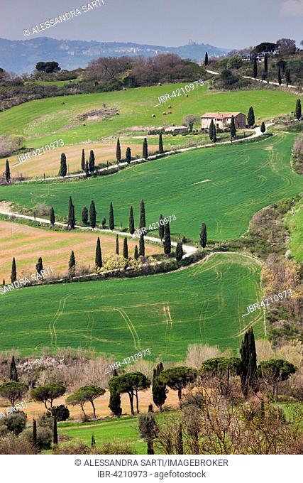 Cypress avenue La Foce, Tuscany, Italy