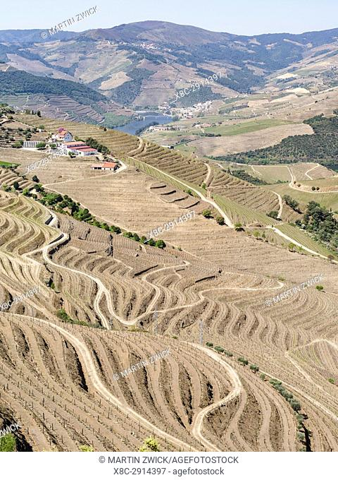Vineyards near Sao Joao da Pesqueira. The valley of river Douro. It is the wine growing area Alto Douro and listed as UNESCO World heritage