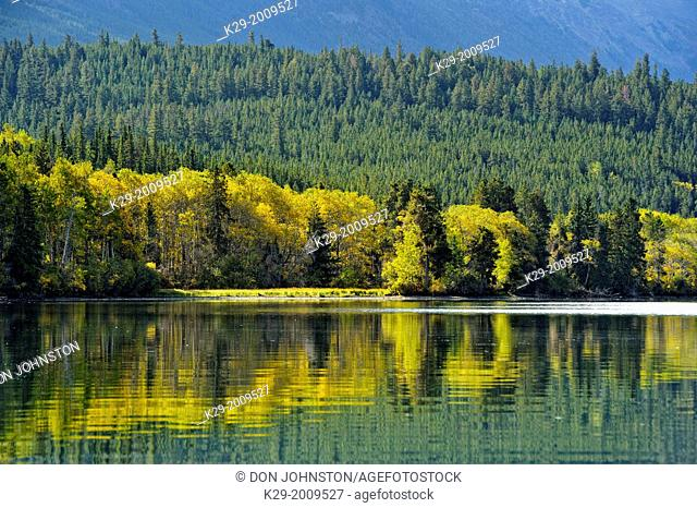 Forests with autumn foliage along the Chilko River, Chilcotin wilderness, British Columbia, Canada