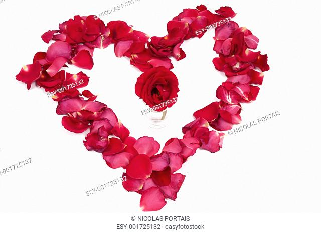 Red rose in a petal heart