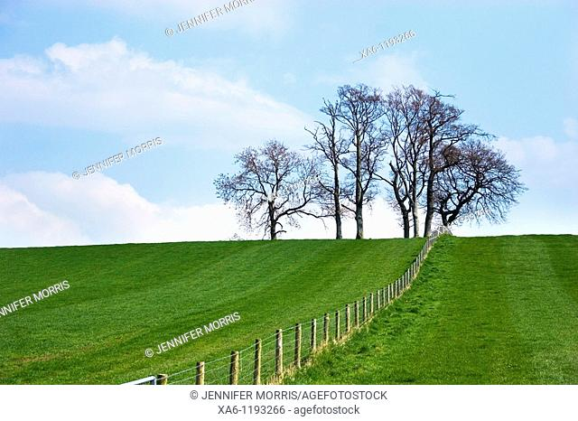 A stand of trees between two fields separated by a fence