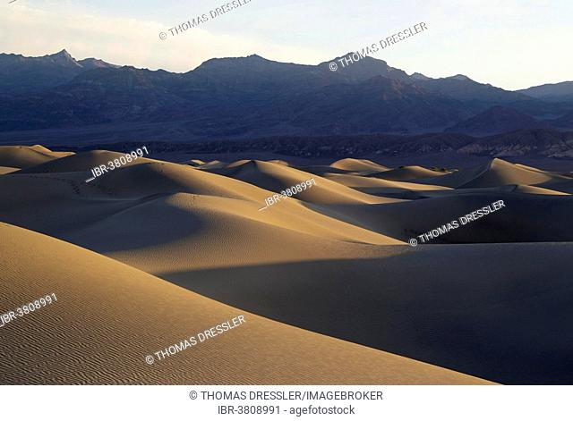 Mesquite Flat Sand Dunes in the early morning, Grapevine Mountains in the back, Death Valley, Death Valley National Park, California, USA