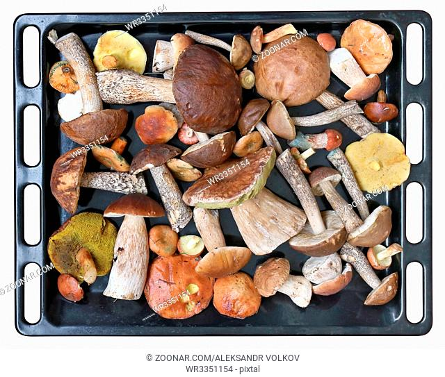 Noble delicacy fresh forest mushrooms on a black metal baking sheet. Prepared for oven drying. Isolated with patch