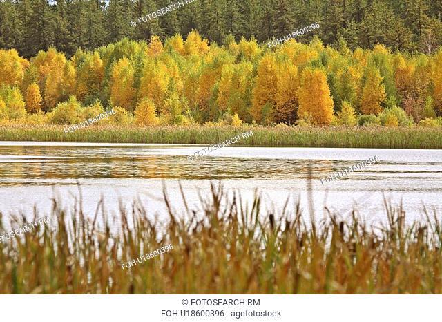water lake in fall autumn leaves marshland marsh